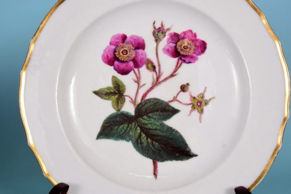 Derby Botanical Plate 2