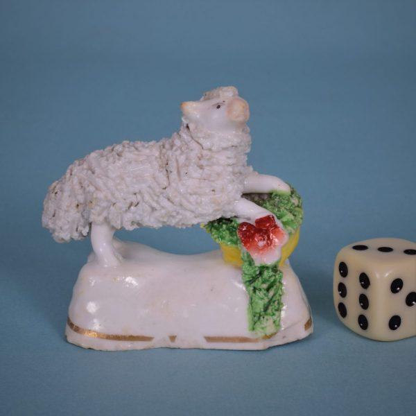 Staffordshire Miniature Lamb