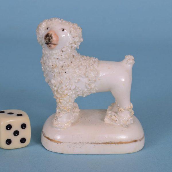 Staffordshire Miniature Poodle (r)