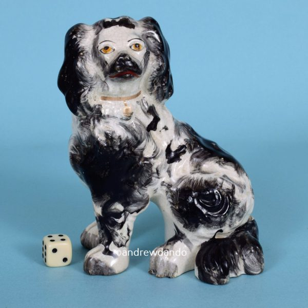 Staffordshire Black & White Spaniel.